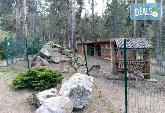 СПА Хотел Борова гора 4* - снимка - 39
