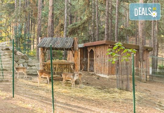 СПА Хотел Борова гора 4* - снимка - 45