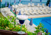 Corfu Holiday Palace Hotel - thumb 13