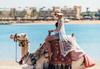 Самолетна почивка в Египет! 7 нощувки на човек на база All inclusive в Desert Rose Resort 5*, Хургада, Червено Море с двупосочен чартърен полет от София - thumb 32